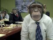 Schräge Antworten im Vorstellungsgespräch Affen im Büro
