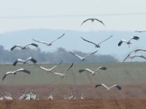 Zugvögel in Hessen. Die Tiere orientieren sich am Erdmagnetfeld - möglicherweise mit Hilfe von Metallkügelchen im Innenohr.