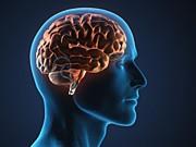 Gehirn, Gedächtnis, iStock