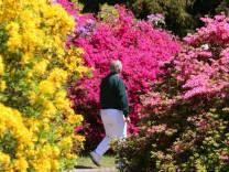 Rhododendronpark Graal-Müritz Rhododendron Garten Park Deutschland Mecklenburg-Vorpommern