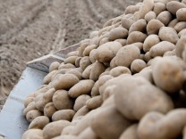 Aussaat von Kartoffeln in Niedersachsen