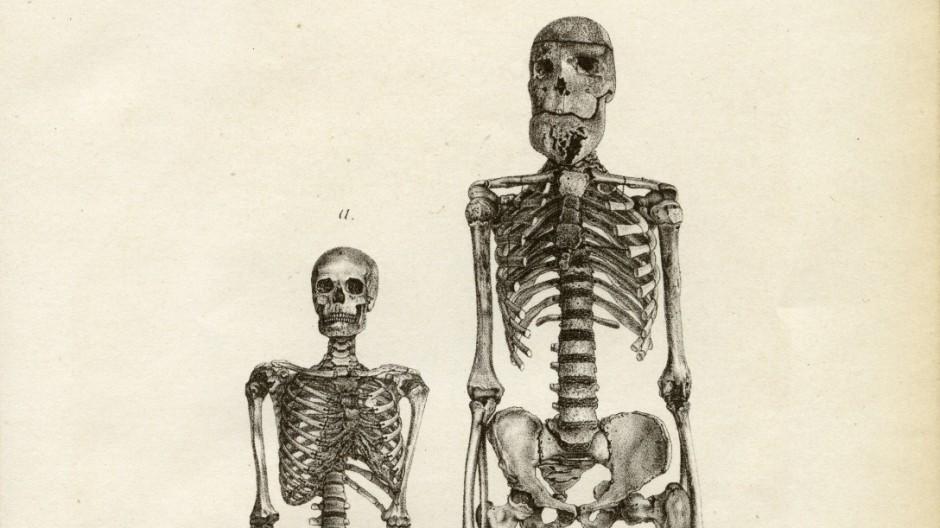Riese vom Tegernsee: Skelett wird ausgestellt - Bayern - Süddeutsche.de