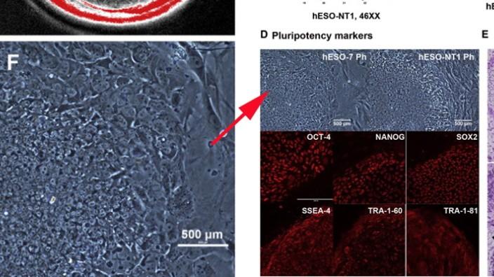 Kritik am Stammzell-Artikel in Cell