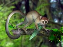 Älteste Skelett eines Primaten