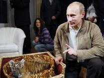 Präsident mit Tiger - in Russland existiert Umweltschutz vor allem auf dem Paper und als TV-Show mit Hauptdarsteller Wladimir Putin
