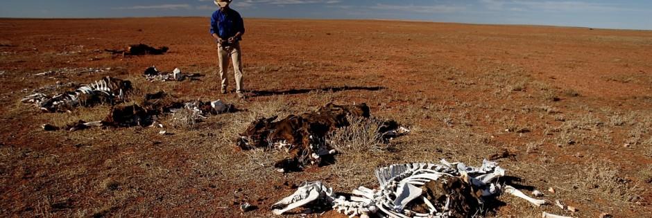 Dürre in Australien