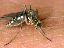 Überschwemmungsgebieten droht Mückenplage