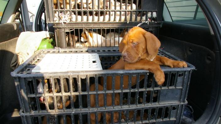 Illegaler Tiertransport gestoppt