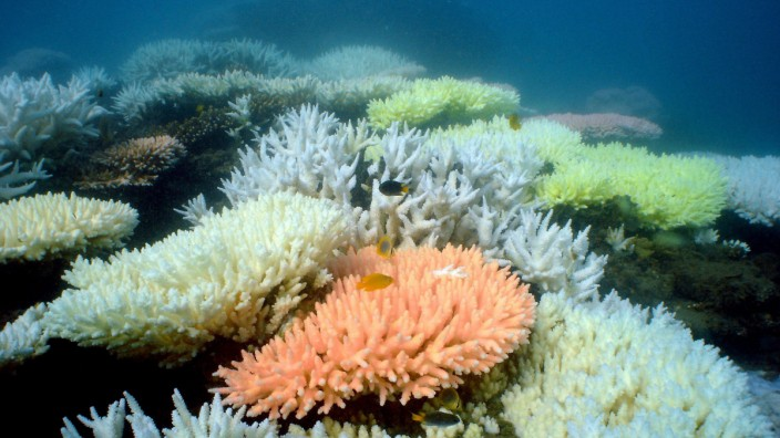 Bomben Great Barrier Reef Australien