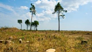 Umwelt Baumschutz mit der Kettensäge