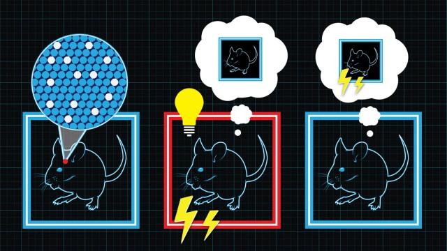 Forscher stellen bei Mäusen gezielt falsche Erinnerungen her