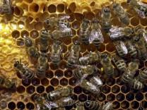 Kälte lässt Bienen im Stock ausharren