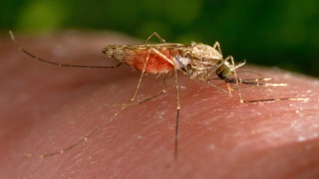 Malaria Entwicklung von Impfstoff