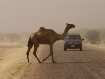 A camel crosses a road during a sandstorm in Ingal