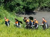 Suche nach Alligator-Schildkröte