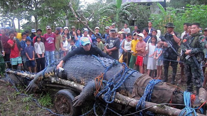 Largest crocodile in captivity dies in Philippines