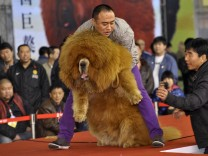 Tibetmastiff
