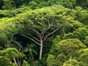 Regenwald, dpa