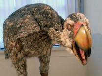 Forscher: Europäische Verwandte der Terrorvögel waren Vegetarier