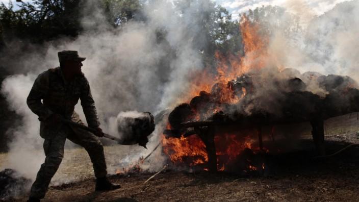 Drogenkrieg Drogen-Vernichtung Mexiko Journalismus