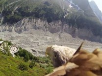 Youtube-Video Seeadler