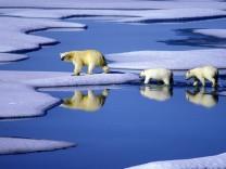 Nur Halbierung der Treibhausgase kann Klimakatastrophe verhindern