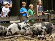 Ausflüge für Kinder: Natur entdecken rund um München