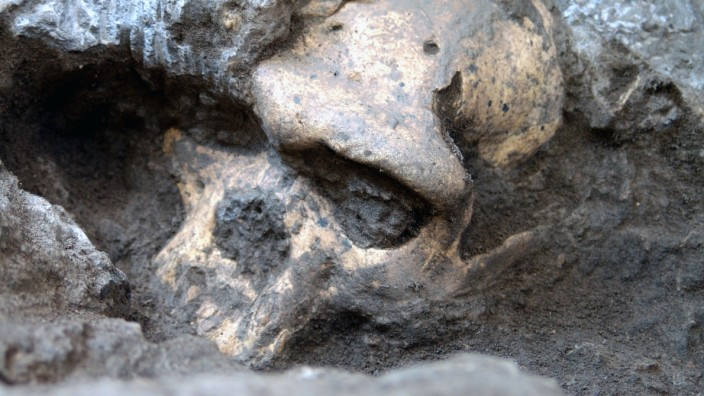 Forscher: Schädelfund widerlegt frühmenschliche Artenvielfalt