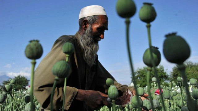 Drogenanbau Afghanistan