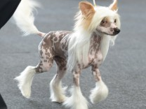 Auch dieser Hund stammt vom Wolf ab