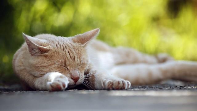Haustiere Katzen als Haustiere