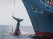 Jagd auf Buckelwale