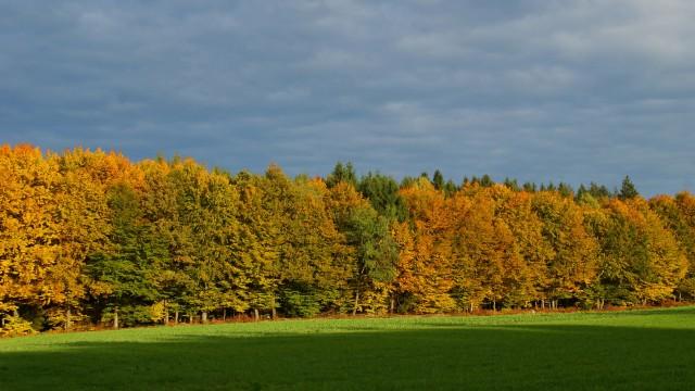 ebersberg Forst