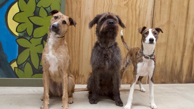 Hunde Sinn für das Erdmagnetfeld