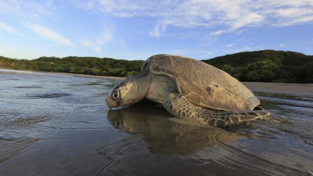 Schildkröten können voneinander lernen