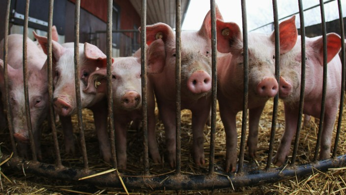Organic Farms Likely To Benefit From Dioxin Scandal