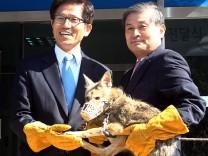 Ein Herz für Wildtiere: Hwang Woo Suk mit Klon-Kojote