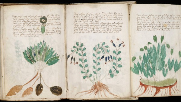 Seite aus dem Voynich-Manuskript