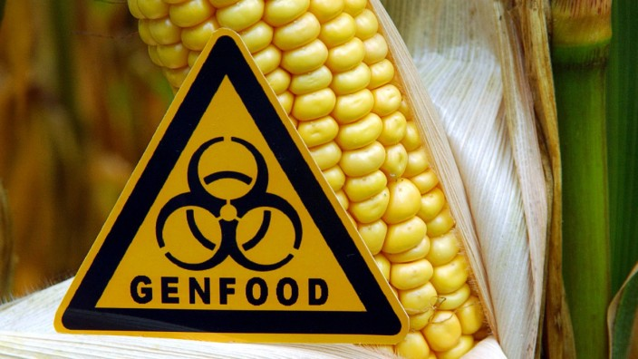 Entscheidung über Genmais-Verbot