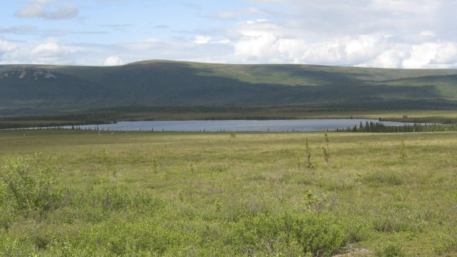 Handout of shrub tundra around Eight Mile Lake, Alaska