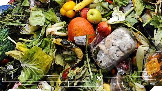 Foodsharing Recherche Fressen und Moral