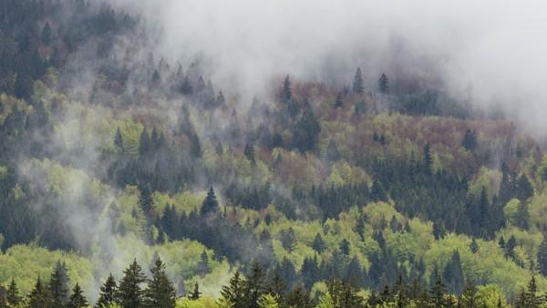 Buchen Bayerischer Wald Zwiesel Deutschland Wald Nationalpark
