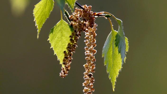 Pollen Und Staub Geballter Angriff Auf Die Schleimhaute