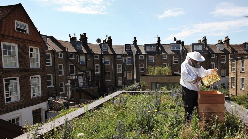 Urban Beekeeping On East London Rooftops