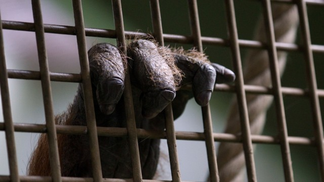 Zootiere sollen unter besseren Bedingungen leben