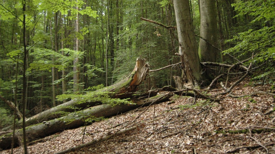Waldnaturschutzgebiet in Franken
