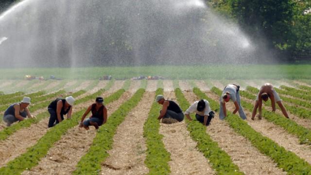 Bayerische Bauern suchen Erntehelfer