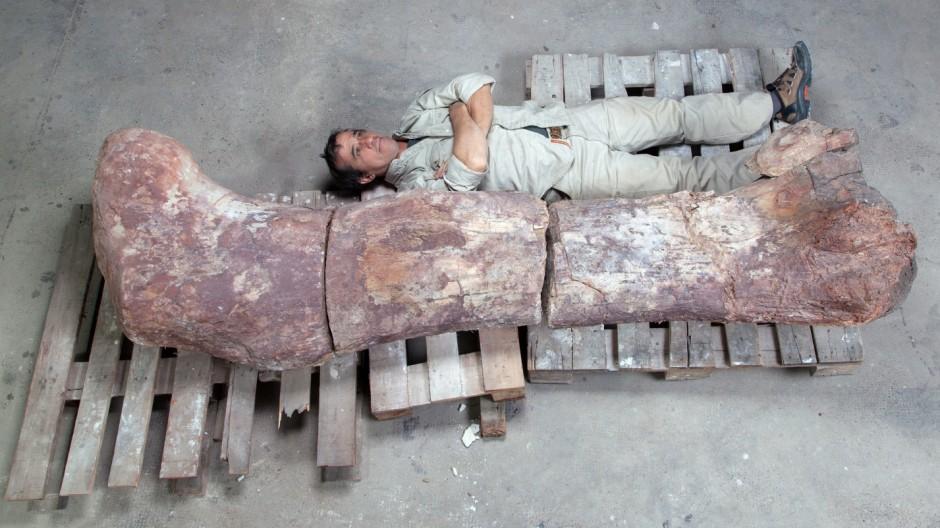 Dinosaurier-Funde in Argentinien