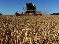 EU-Agrarreform - Weizenernte
