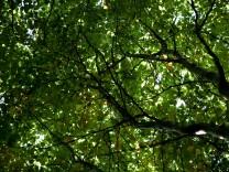 Klimawandel und Wald